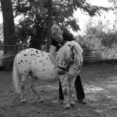 Ponyfee